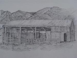 TegningerfraNewZealand005
